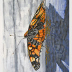 stephen heymann fine art painting butterfly